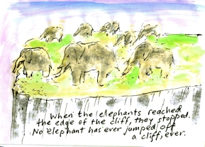 Elephants and Cliff1